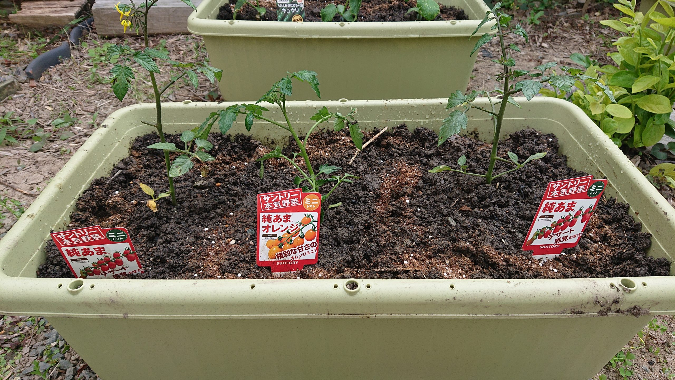 家庭菜園はじめました!